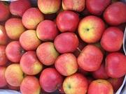 Польские яблоки оптом