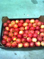 Прямые поставки польского яблока