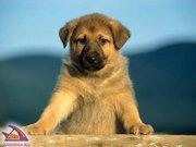 помощь ветеринарного врача