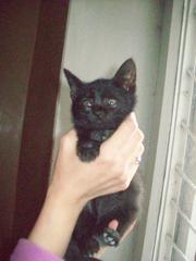 Очаровательный котенок в добрые руки